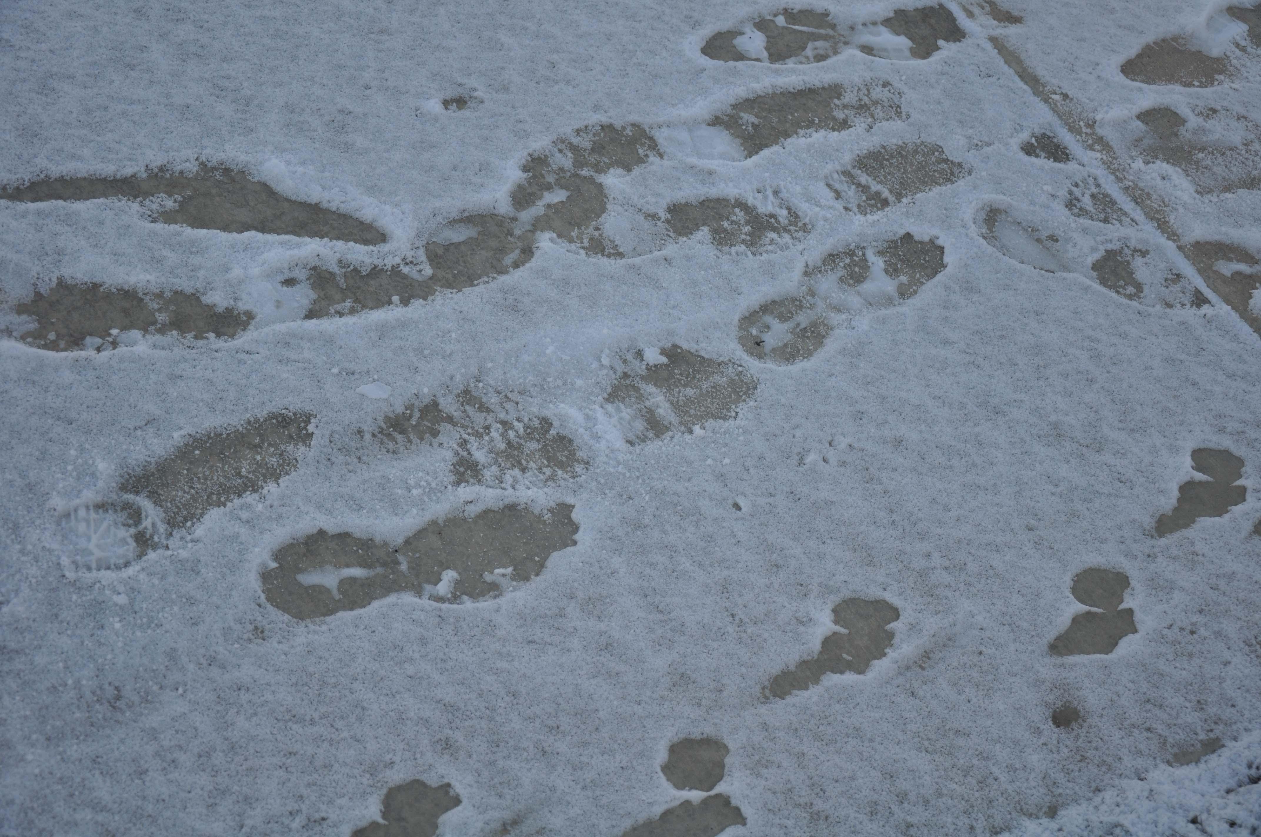 2011-ut-sidewalk-no-2