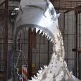 2013-phx-land-shark