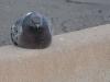 pigeon-no-4